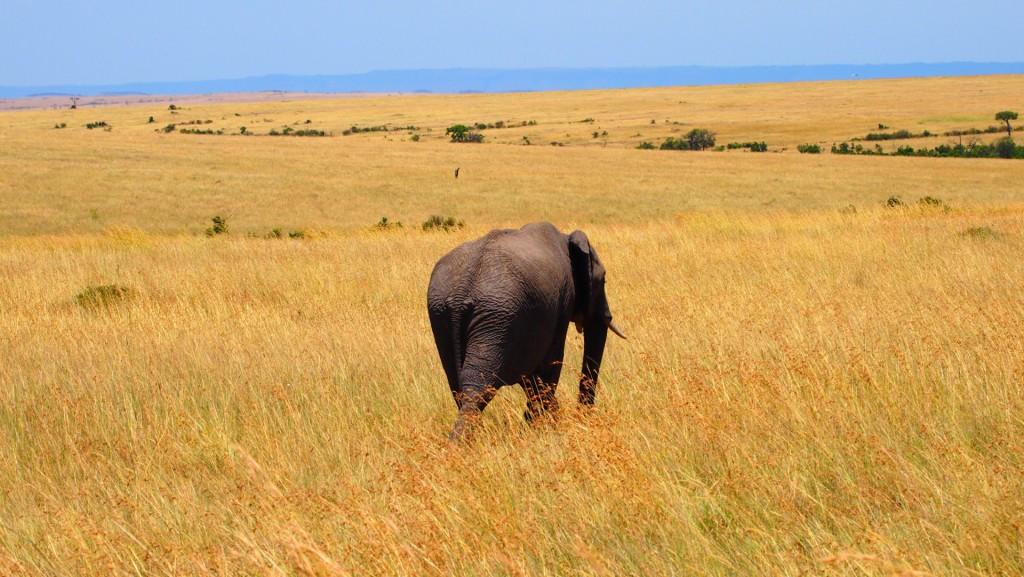 Natur in Kenia