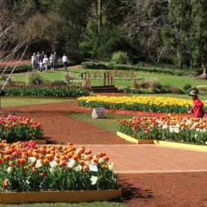 Araluen Botanic Park, Roleystone, Western Australia