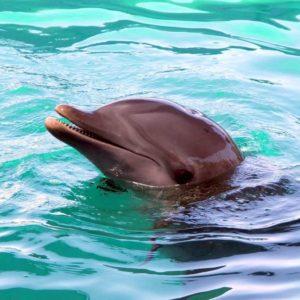 Delfin, Bahamas