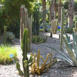 Garten, Marokko