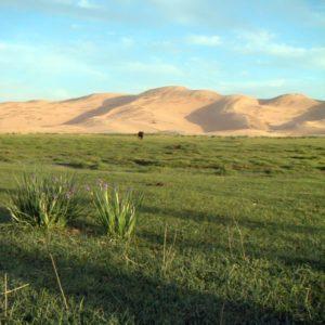 Gobi Wüste, Mongolei