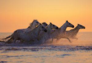 Pferde Meer