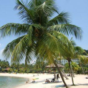 Palmen und Strand, Singapur