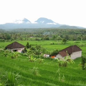 Reisfelder Landschaft, Bali, Indonesien
