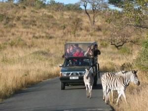 Zebras Hluhluwe-iMfolozi Park